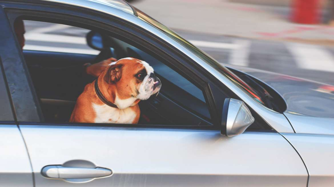 Tips for Safe Driving With Pets In The Car